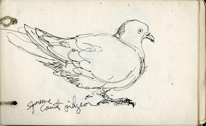 SC790000_pigeon